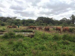 Elephant Orphanage - Kenya Nairobi